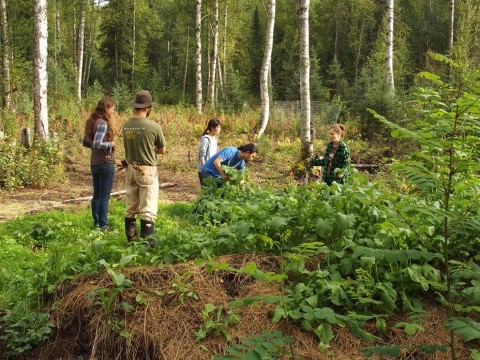 talkeetna farm tours can be provided to those staying in our ffarmstay talkeetna lodging so they can see what denali permaculture is like on our cold climate permaculture farm